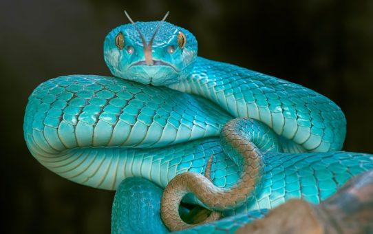 Зоопсихология и зоотерапия. Терапия змеями.