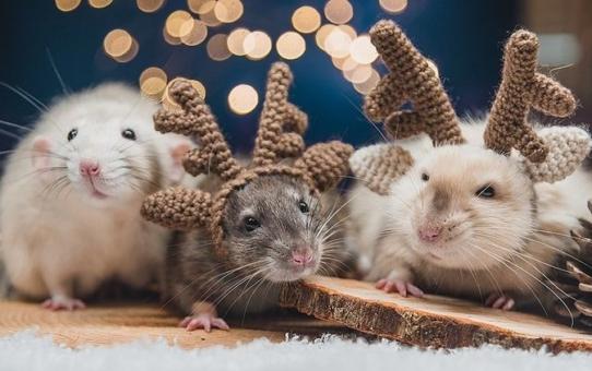 С Новым 2020 годом! Годом белой металлической крысы!!!